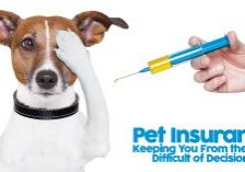 Pet Insurance Keeping You From the Most Difficult of Decisions